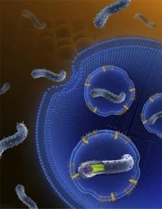埃博拉病毒入侵细胞示意图