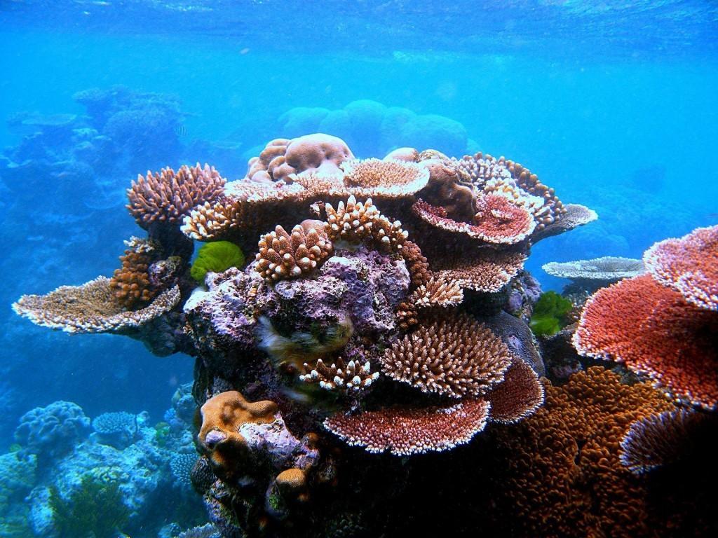 人类活动加速南海珊瑚死亡