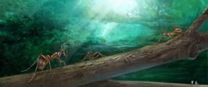 独角蚁生态复原