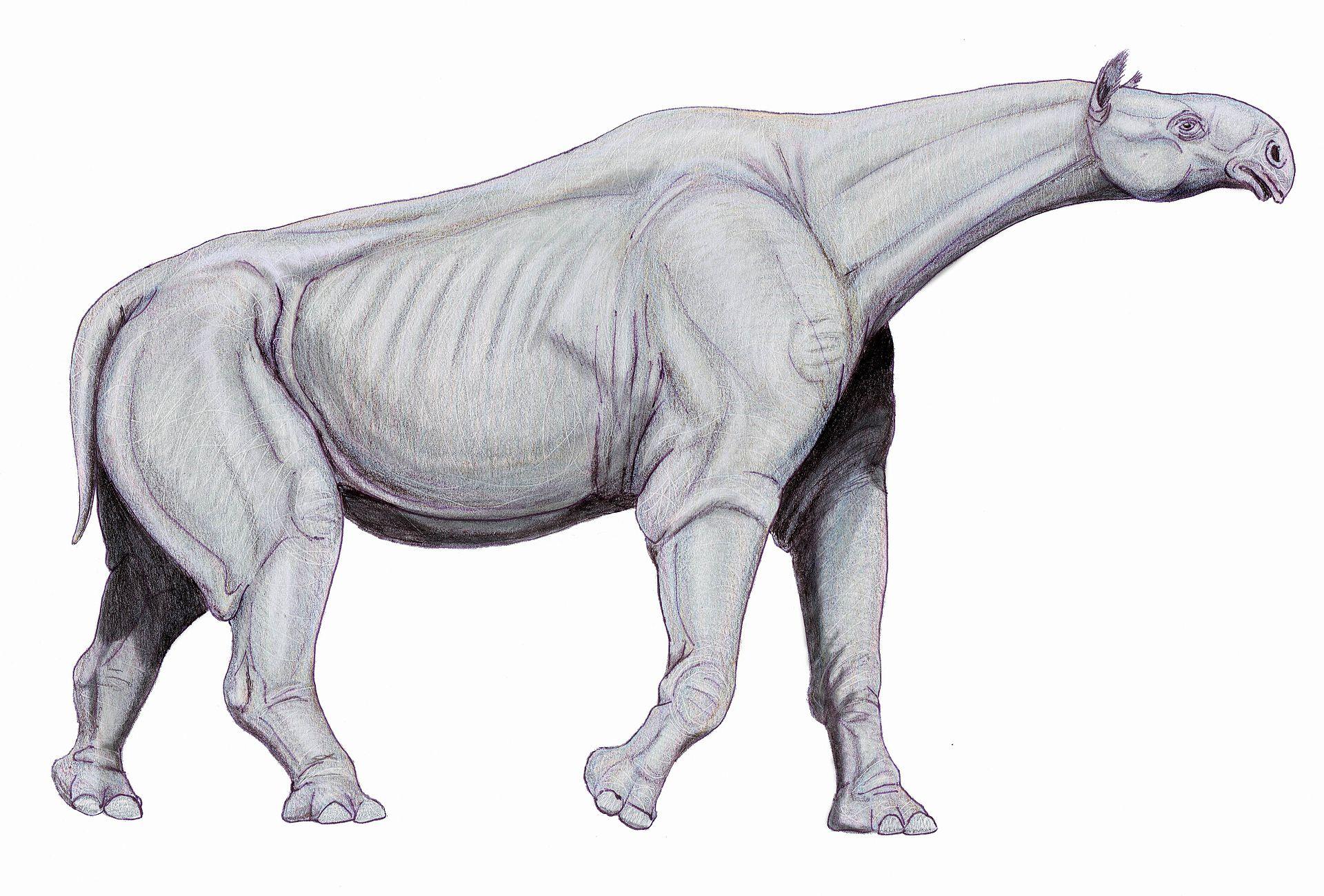 内蒙古发现巨犀完整头骨化石