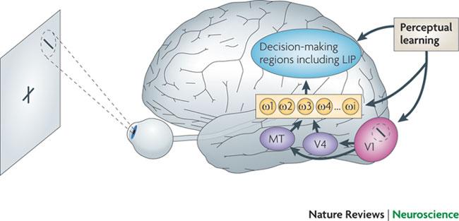 知觉学些改变大脑区域(来源Nature)