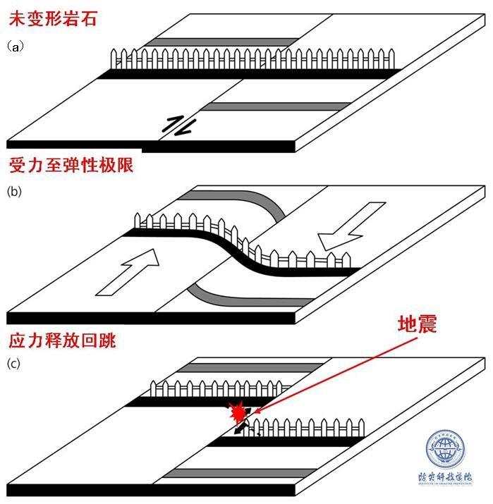 跨圣安德烈斯断层的篱笆当断裂弹性回跳时造成的结果。(a)篱笆垂直穿过断层,地震前未发生形变。(b)构造力作用下横过断层的篱笆发生弯曲,两侧向相反方向移动;(c)在应变最大处发生破裂。