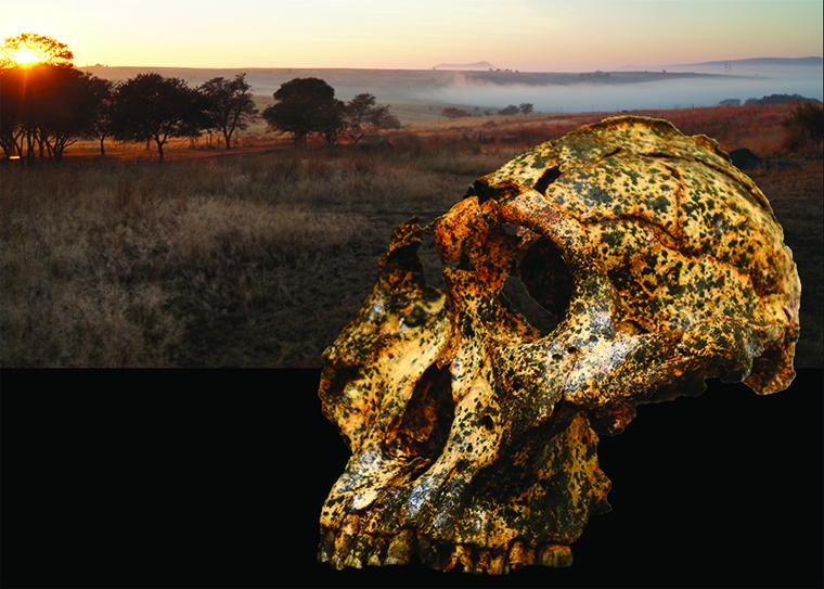 科学家在南非发现200万年前人类头骨