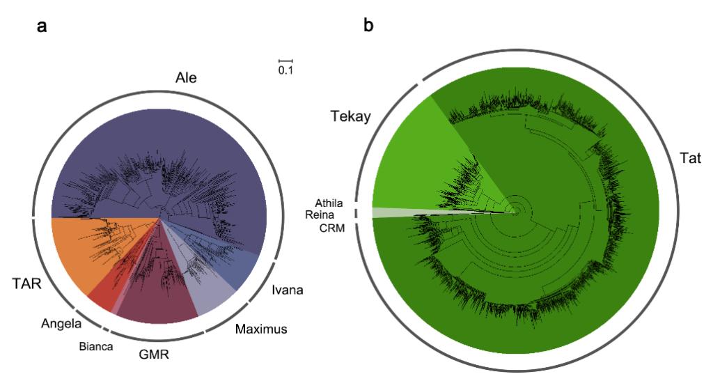 人类终于知道茶的味道为什么不一样了,科学家首次成功破译茶树基因组