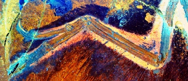 激光诱导萤光下的近鸟龙翅膀(一种带羽毛,类似鸟类的恐龙)。肘部前面和腕部后面的皮肤部分(叫做翼膜)被羽毛覆盖,和现存的鸟类相近。